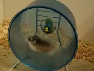 Watch and share Fast Robo Hamster On Wheel GIFs on Gfycat