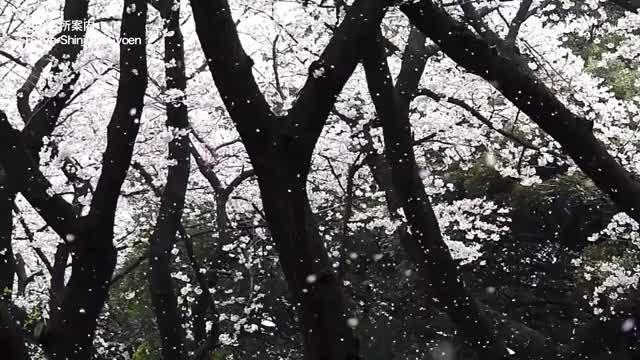 Watch and share Naturegifs GIFs on Gfycat