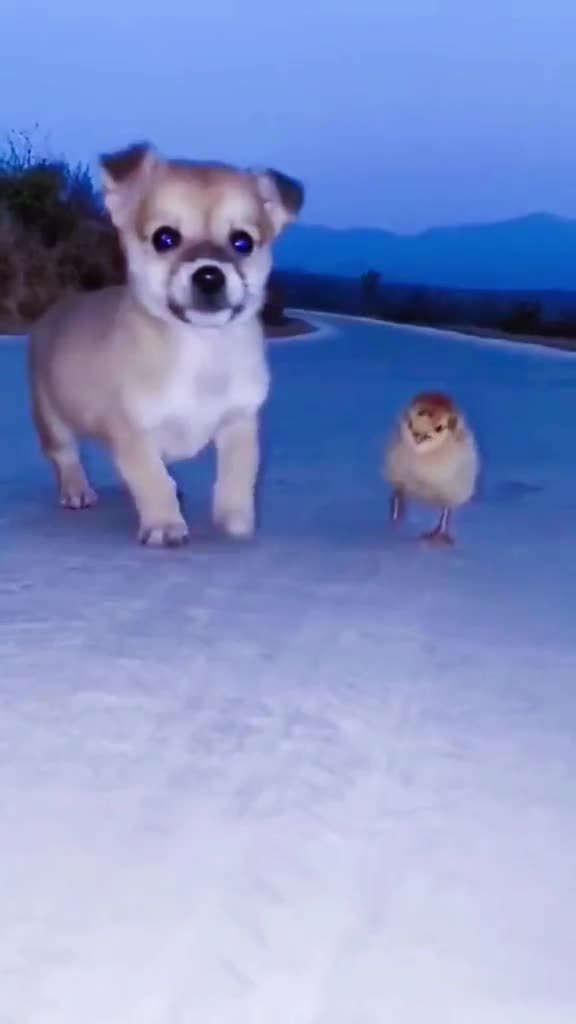 Watch and share Snaptik 6969965249575275781 Cutedog-01 GIFs by Thund3rbolt on Gfycat