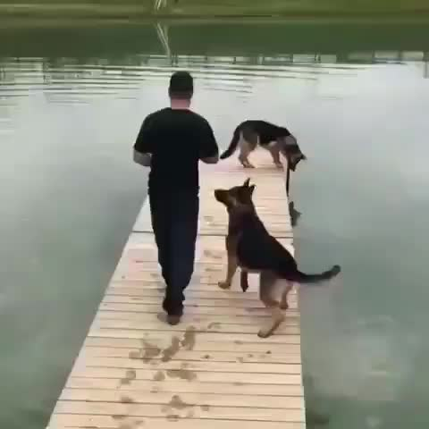 Watch Pupper struggling to learn from their mistakes GIF by tothetenthpower (@tothetenthpower) on Gfycat. Discover more related GIFs on Gfycat