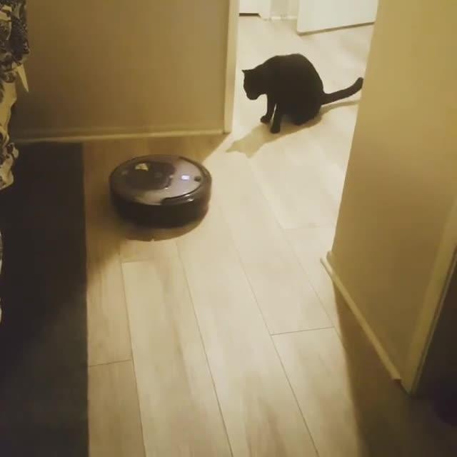Cautious kitty GIFs