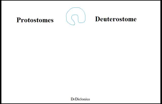 Watch Biology Protostomes vs Deuterostome GIF on Gfycat. Discover more deuterostome, protostomes GIFs on Gfycat