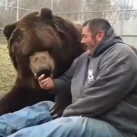 Watch and share Bear GIFs by aliciaheart on Gfycat