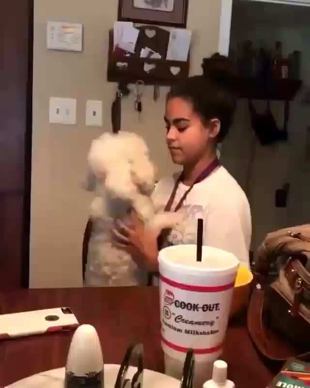 A pupper showing they just absolutely love their human (@haha.celeste) GIFs