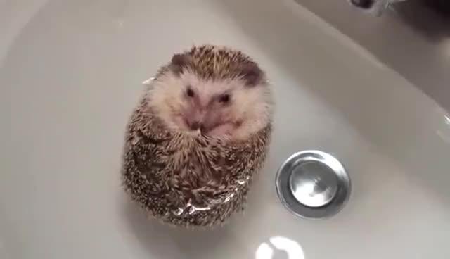 hedgehog, Hedgehog Boat GIFs