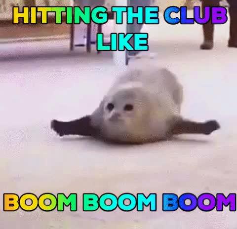 Watch and share Clubbing Seal GIFs on Gfycat