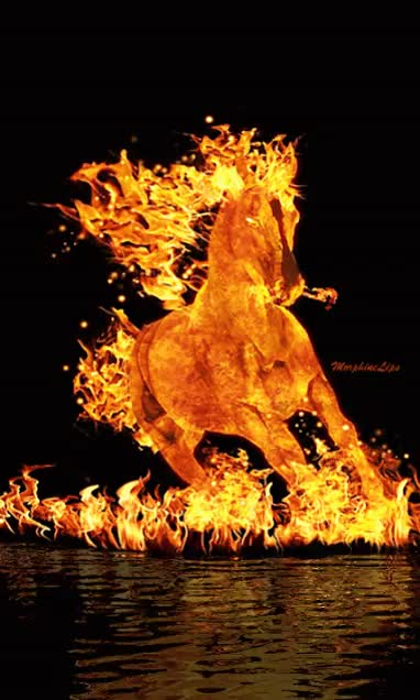 Watch and share Caballo De Fuego GIFs on Gfycat