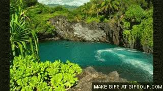 Watch and share Hawaii 4 GIFs on Gfycat