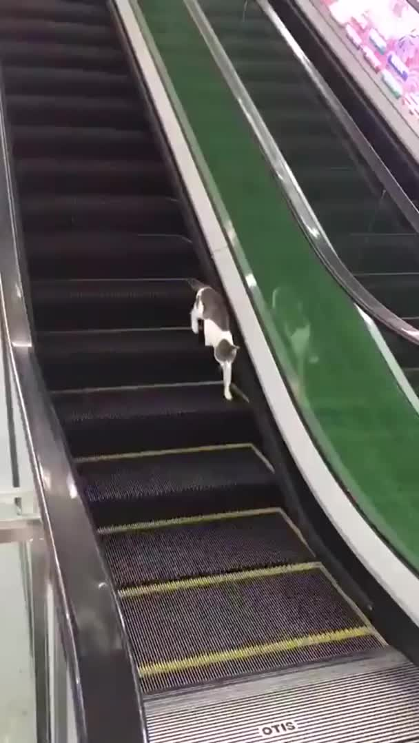 Watch and share Derp GIFs and Aww GIFs by notmyproblem on Gfycat