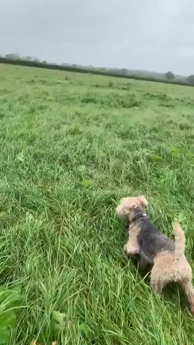 Watch and share Source: Bertie_lakeland On Twitter GIFs by Nomorefoxgiven on Gfycat