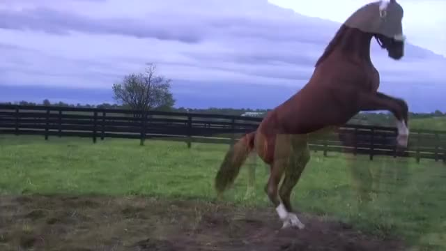 Watch and share A Taylor Made Home For California Chrome GIFs by The Livery of GIFs on Gfycat