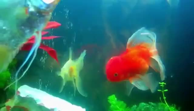 Watch aquarium GIF on Gfycat. Discover more related GIFs on Gfycat