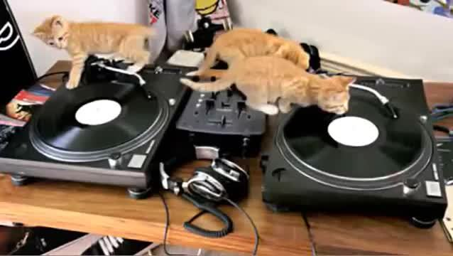 kittengifs, DJ KickassPaws mixing some good stuff (reddit) GIFs