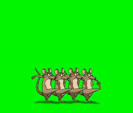 Watch and share Animated Dancing Rats - Greenscreen GIFs on Gfycat