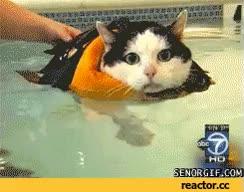 Watch and share Swim GIFs on Gfycat