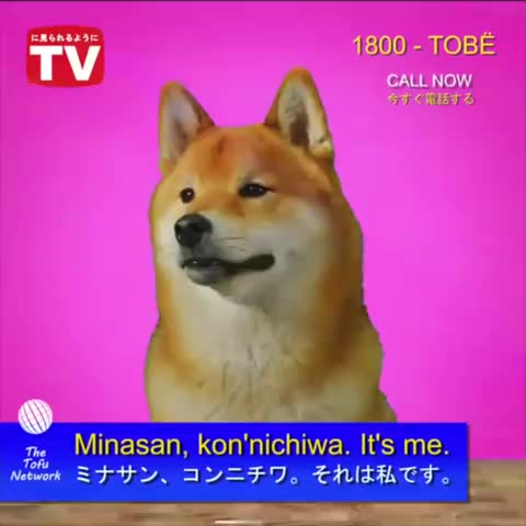 Watch and share Tofu Chan GIFs and Bread Ad GIFs by Foxat on Gfycat