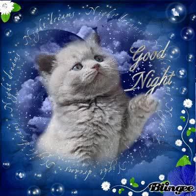 Watch and share Sleep Well Cat GIFs on Gfycat