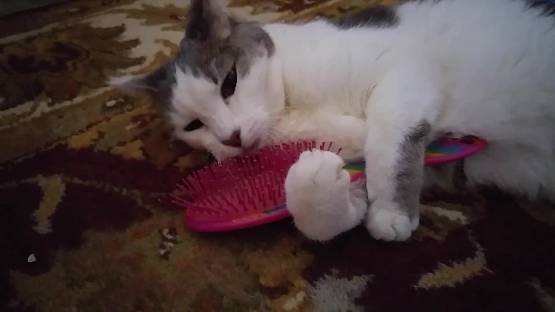 brushybrushy, petbehavior, seniorkitties, Seek brushing herself GIFs