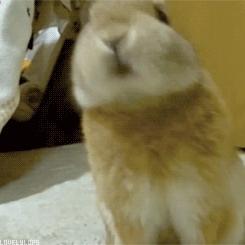 RabbitS GIFs