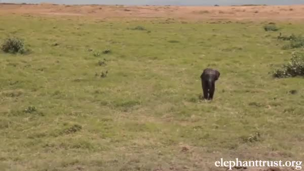 Watch Mother runs to her baby right after he was rescued from a large hole. Story and source vid in comments. (reddit) GIF on Gfycat. Discover more babyelephantgifs GIFs on Gfycat