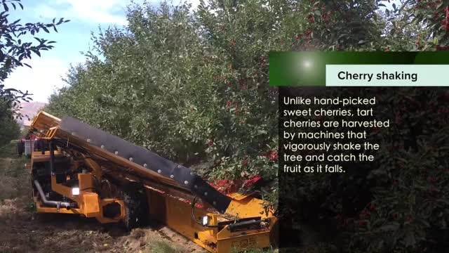 Watch and share Good Fruit Grower GIFs and Columbia Basin GIFs on Gfycat