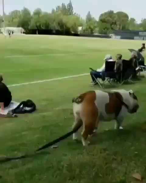 Good boy knows now to make an entrance GIFs