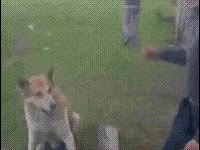 Watch funny, dog, deal, shake, agreed GIF on Gfycat. Discover more related GIFs on Gfycat