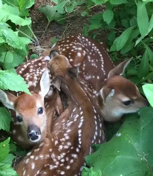 Watch this animals GIF by tothetenthpower (@tothetenthpower) on Gfycat. Discover more animals, deer GIFs on Gfycat