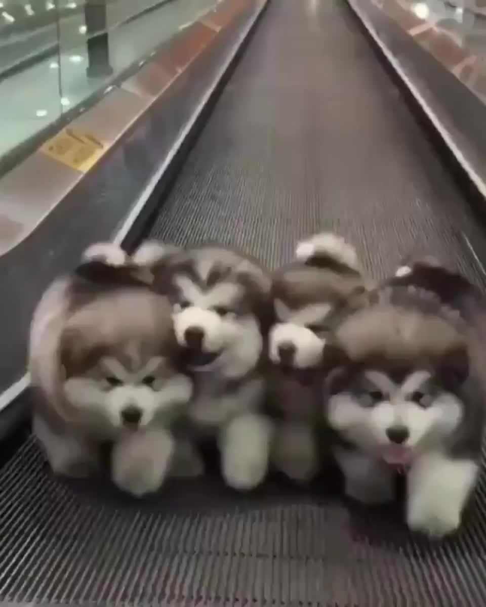 Puppy, cute, funny, le9WIir GIFs