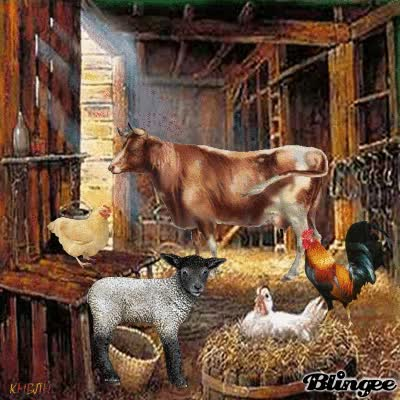 Watch and share Farm Animals In The Barn GIFs on Gfycat
