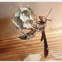 Watch and share Wasps GIFs on Gfycat