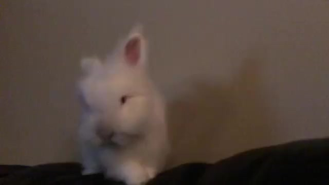 Watch Video by sugar_the_bun GIF on Gfycat. Discover more ✨Sugar🍭✨ GIFs on Gfycat