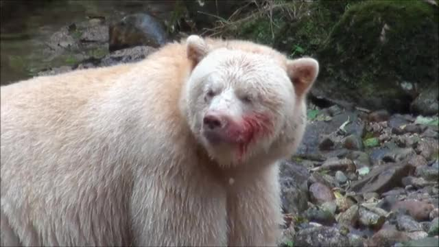 Watch and share Bloody Bear GIFs by efitz11 on Gfycat