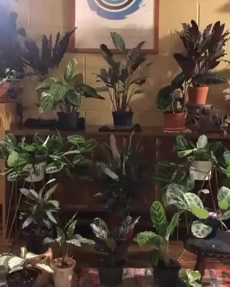 Watch and share Plants Are Alive GIFs by esberat on Gfycat