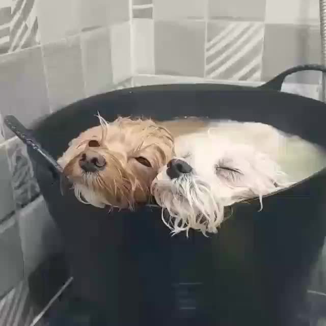 Steamed puppers GIFs