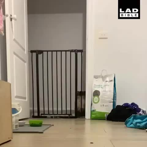 Watch and share Awwwww GIFs and Awww GIFs by Boojibs on Gfycat
