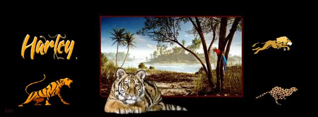 Watch and share HARLEY FOOTER TIGER GIFs on Gfycat