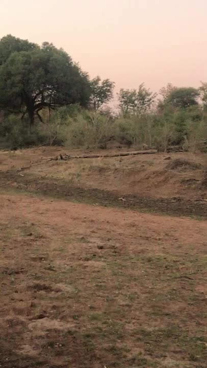 Watch and share African Wild Dog Chases Down An Impala GIFs by Pardusco on Gfycat