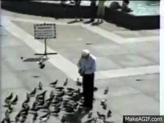 Watch Birds. GIF on Gfycat. Discover more related GIFs on Gfycat