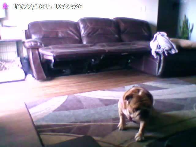 animalsbeingderps, gifs, Sit and Spin GIFs