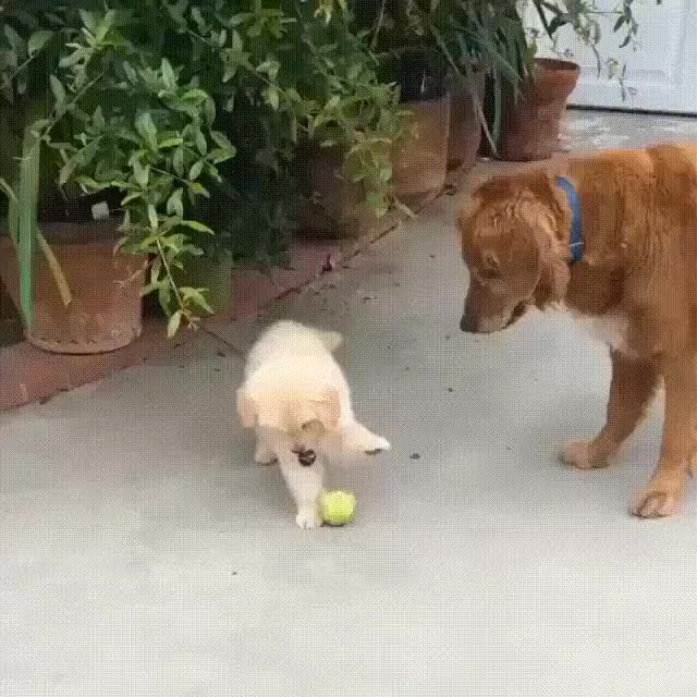 Watch and share Puppy GIFs and Dog GIFs by teistom on Gfycat
