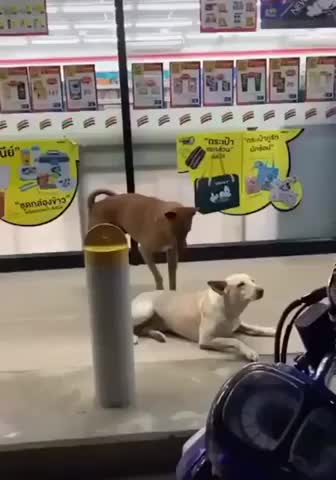 Watch and share Dogs GIFs by Ah Negão on Gfycat