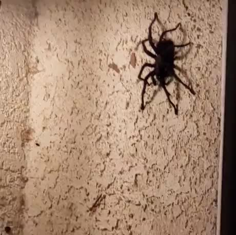 Just checking if spider is real - gif