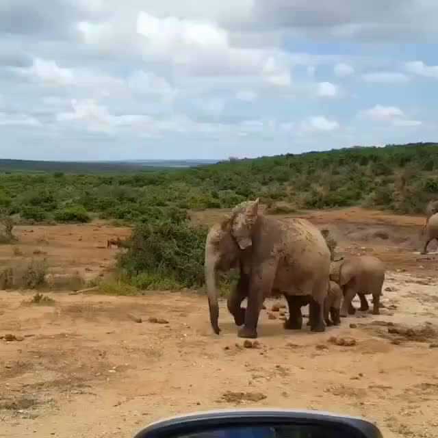 Watch and share Southafrica GIFs and Elephants GIFs by PM_ME_STEAM_K3YS on Gfycat