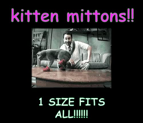 Watch kitten mittens GIF on Gfycat. Discover more related GIFs on Gfycat