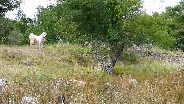 Watch and share Knsfarm GIFs and Doggo GIFs by KNS Farm on Gfycat
