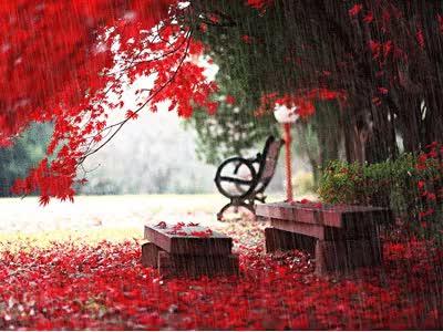 Watch and share Romantic Rain GIFs on Gfycat
