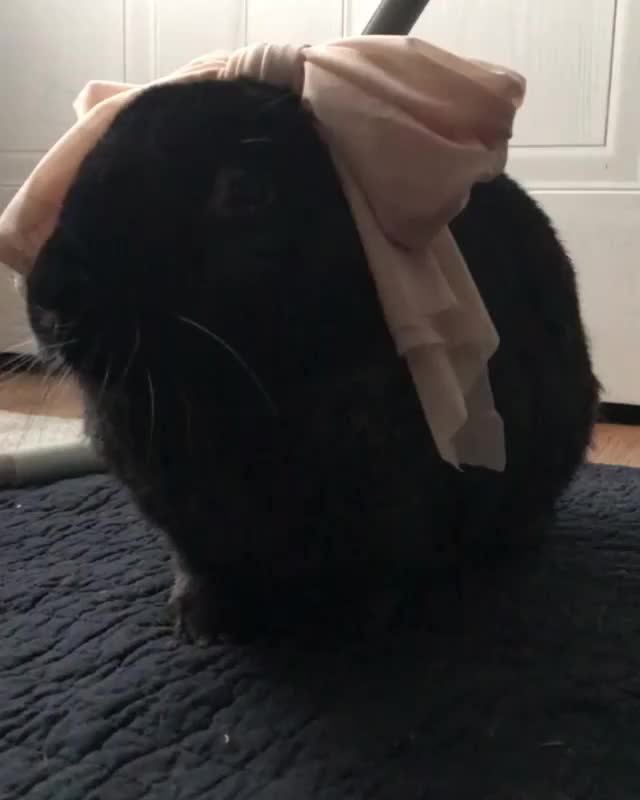 Watch and share Houserabbit GIFs and Fosterfail GIFs on Gfycat
