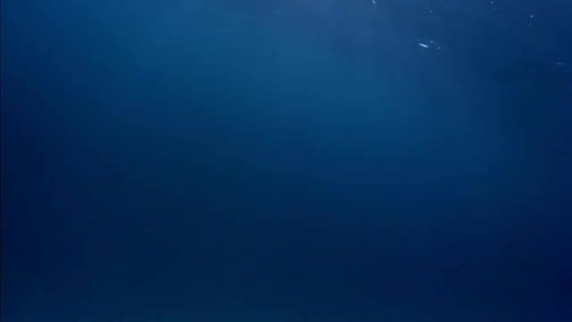 Watch and share Background GIFs and Underwater GIFs on Gfycat