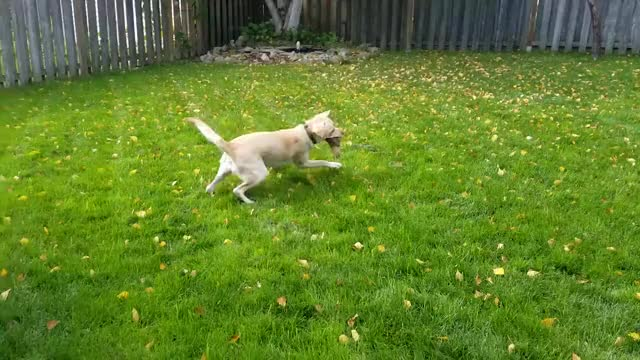 Watch Zoomies GIF on Gfycat. Discover more People & Blogs, Special Sauc3 GIFs on Gfycat